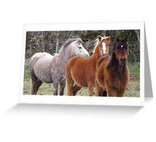 Windswept ponies Greeting Card