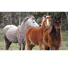 Windswept ponies Photographic Print