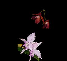 Cellphone Case Orchid Flower 4 by Gotcha29