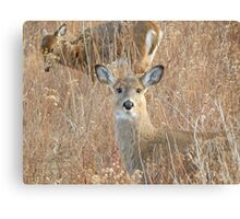 White tail deer in the brush Canvas Print