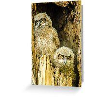 Baby Great Horned Owl Siblings Greeting Card