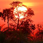 Sunrise in the Okavango Delta by jozi1