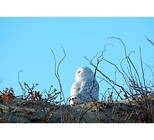 Snow owl Photographic Print