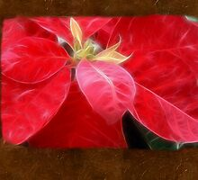 Mottled Red Poinsettia 2 Blank P3F0 by Christopher Johnson