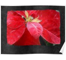 Mottled Red Poinsettia 2 Blank P4F0 Poster