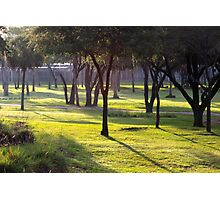 Morning in Africa Photographic Print