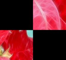 Mottled Red Poinsettia 2 Blank Q2F0 Sticker