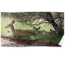 Mule Deer Doe and Fawns Poster