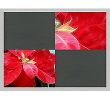 Mottled Red Poinsettia 2 Blank Q6F0 Photographic Print