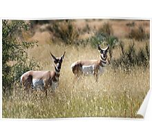 Southwest New Mexico Antelope Poster