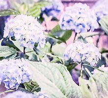Blue Hydrangea Flower by Elizabeth Thomas