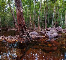 Florence Falls Panorama by Natalie Ord