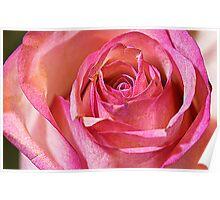La Rose Rose -  macro Poster