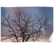 Toronto Ice Storm 2013 -  Icy Branches Sunset Poster
