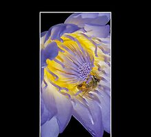 Macro Bee Water Lily Cellphone Case Cover 35 by Gotcha29