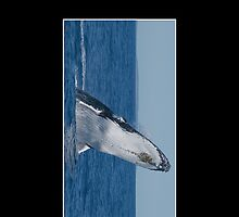 Breaching Humpback Whale Cellphone Case Cover 40 by Gotcha29