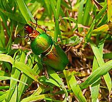 Christmas Beetle Photograph by fantasytripp