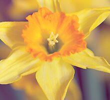 Daffily Delightful by Josie Eldred