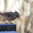Lady Bird by Lynn Starner