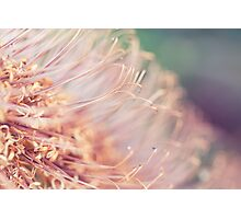 The World of Stamens Photographic Print