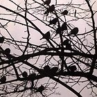 Birds Silhouettes by Vitta