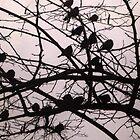 Birds Silhouettes by Vitta