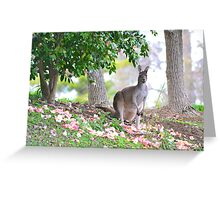 Hippy Roo Greeting Card