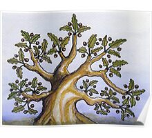chêne commun - common oak tree Poster