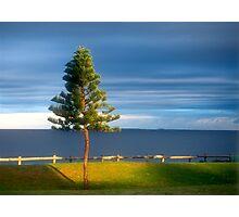 Cottesloe Pine Photographic Print