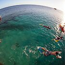 swimming on heron Island - Australia by Anthony Wilson