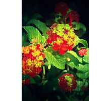 Summer Blossom  Photographic Print