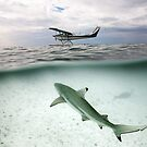 Under/over shot - Shark and Sea plane - Heron Island by Anthony Wilson