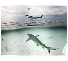 Under/over shot - Shark and Sea plane - Heron Island Poster
