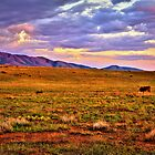 Sunset Pasture by Diana Graves Photography