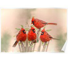 Cardinal Quartet Poster