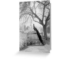 Bench Peacock Greeting Card