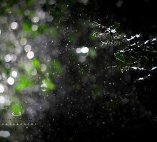 """ Sparkling Rain In The Sun Lit Glade ""  by Richard Couchman"