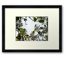 Through the Branches Framed Print