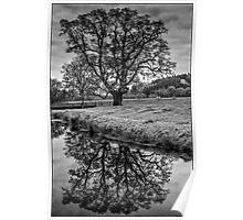 Castle Hill Tree - Devon. Poster