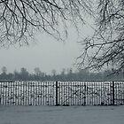 Winter Fog by helloimbethany