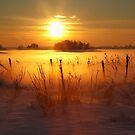 Frosty Winter Morning by Martina Cross