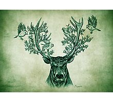 Deer and Birds Photographic Print