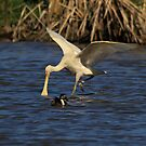 Yellow Spoonbill No 2 by Kym Bradley