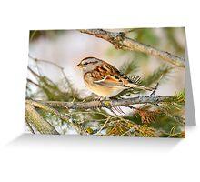 American Tree Sparrow  Greeting Card