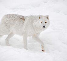 Arctic Walk... by Poete100