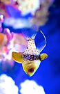 Tropical Fish by Renee Hubbard Fine Art Photography