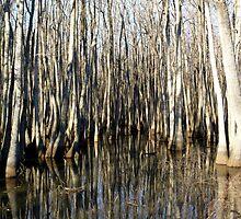 Swamp by WildestArt