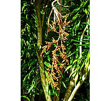 Leaves and Pods  Photographic Print