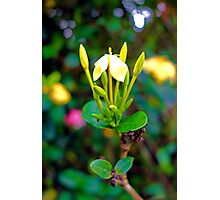 Yellow Upright   Photographic Print