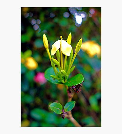 Yellow Upright   Photographic Print